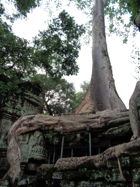 Ta Prohm Temple (dubbed Tomb Raider Temple because of the 2000 film)) at Angkor Wat
