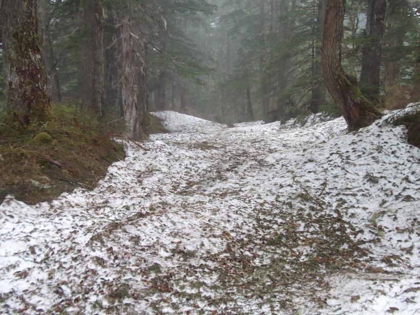 Mt. Roberts trail, Juneau, Alaska