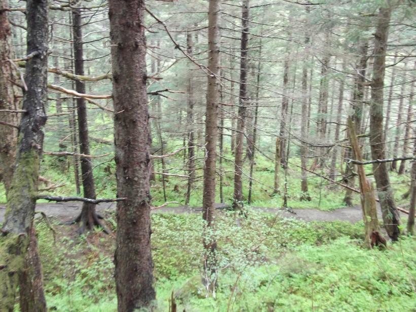 Perseverance trail, Juneau, Alaska