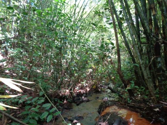In the bush.